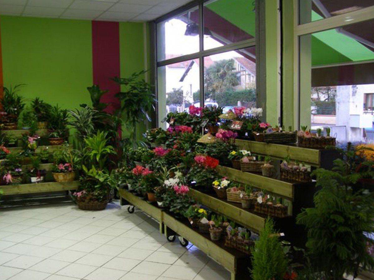 Fleuriste albi expert en livraison fleurs toujours fleurs for Site livraison fleurs